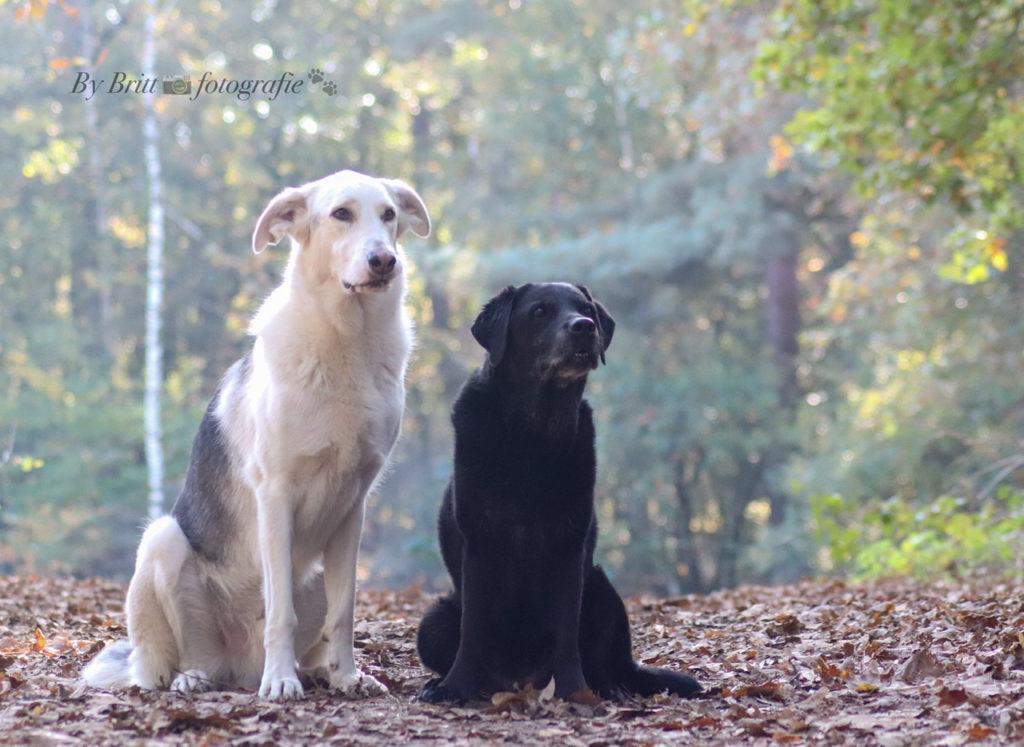 fotoshoot meerdere honden